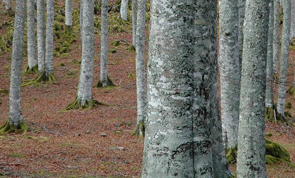 madera-de-bosques-sostenibles-wooduart